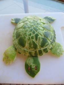skoldpadda
